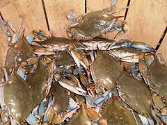 [photo, Blue crabs, Baltimore Farmers Market, Baltimore, Maryland]
