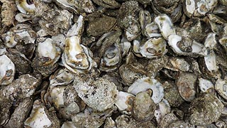 [photo, Oyster shells, Benedict, Maryland]