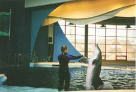 [photo, Dolphin, National Aquarium, East Pratt St., Baltimore, Maryland]