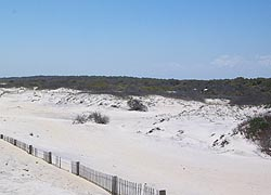 [photo, Assateague Island National Seashore (Worcester County), Maryland]