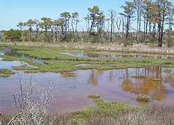 [photo, Assateague Island National Park Seashore (Worcester County), Maryland]