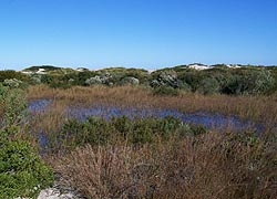 [photo, Assateague Island National Seashore, Berlin (Worcester County), Maryland]