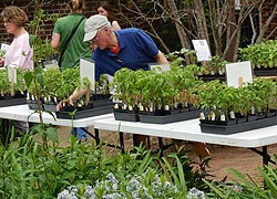 [photo, Plant sale, William Paca House & Garden, Annapolis, Maryland]