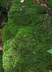[photo, Moss, Thurmont, Maryland]