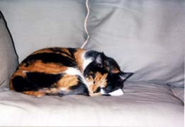 [photo, Sleeping calico cat, Canton, Baltimore, Maryland]