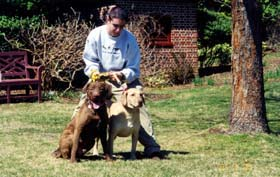 [photo, Two Chesapeake Bay Retrievers (brown on left, deadgrass color on right), Annapolis, Maryland]