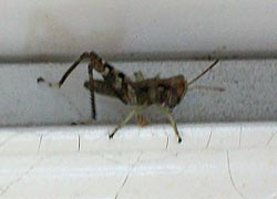 [photo, Grasshopper, Baltimore, Maryland]