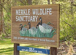 [photo, Merkle Wildlife Sanctuary, 11704 Fenno Road, Upper Marlboro, Maryland]