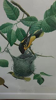 [photo, Baltimore Oriole & nest, Governor's State Bird Prints series, State Law Library, Murphy Courts of Appeal Building, 361 Rowe Blvd., Annapolis, Maryland]