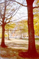 [photo, Trees near Murphy Courts of Appeal Building entrance, 361 Rowe Blvd., Annapolis, Maryland]