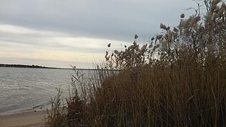 [photo, Patuxent River and grasses near Benedict (Charles County), Maryland]