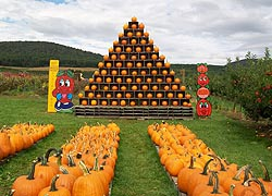 [photo, Pumpkins, Frederick County Fair, Frederick, Maryland]