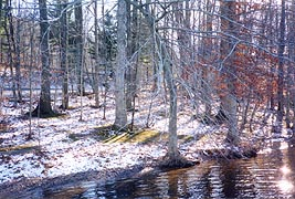 [photo, Trees at Hunting Creek Lake, Cunningham Falls State Park, Thurmont, Maryland]