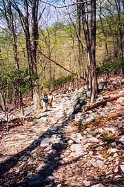 [photo, Hikers in Catoctin Mountain National Park near Thurmont, Maryland]
