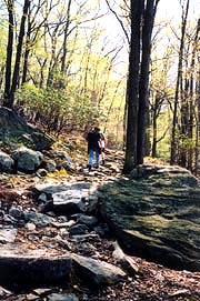 [photo, Hikers in Catoctin Mountain National Park, Thurmont, Frederick County, Maryland]