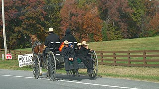 [photo, Amish family, horse, and buggy, south of Hughesville, Maryland]