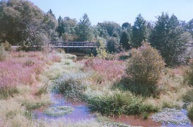 [photo, Adkins Arboretum, Tuckahoe State Park, 12610 Eveland Road, Ridgely, Maryland]